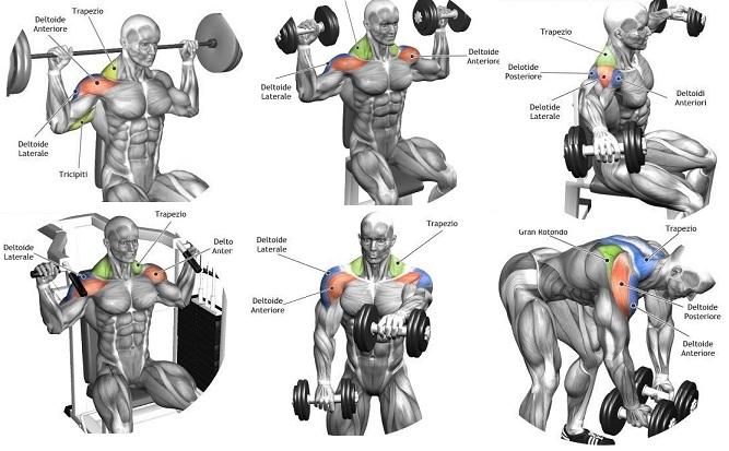 exercices de musculation pour les épaules